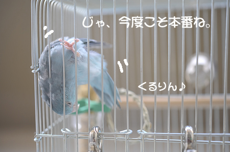 DSC_4240.jpg