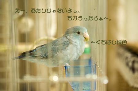 DSC_4874-5.jpg