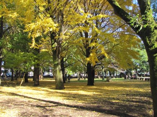 芦花公園2