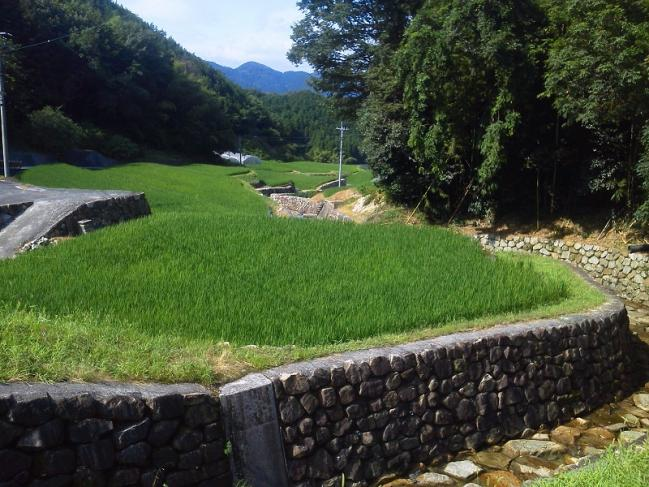 20110722_風景-002