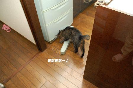 20090718kotetsu4.jpg