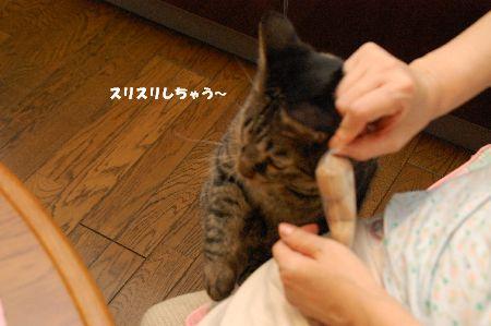 20090731kotetsu4.jpg