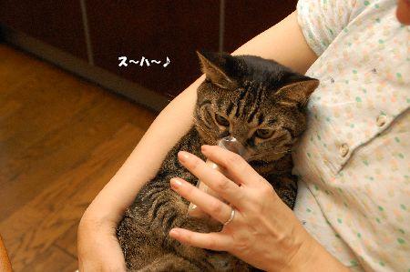 20090731kotetsu5.jpg