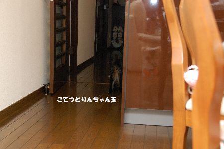 20090731kotetsu7.jpg