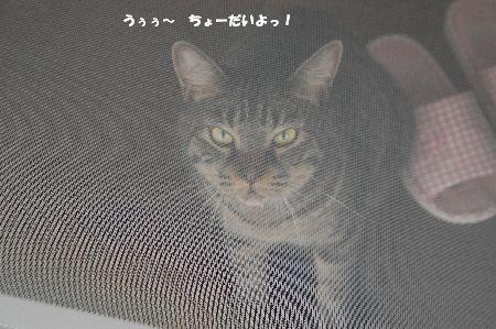 20090806kotetsu3.jpg
