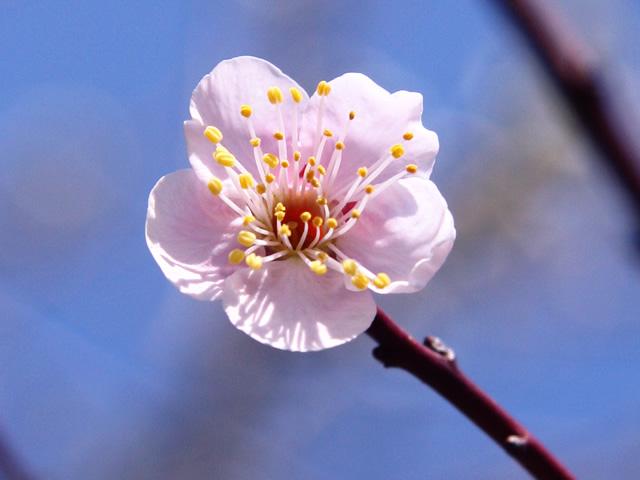 花のように咲く