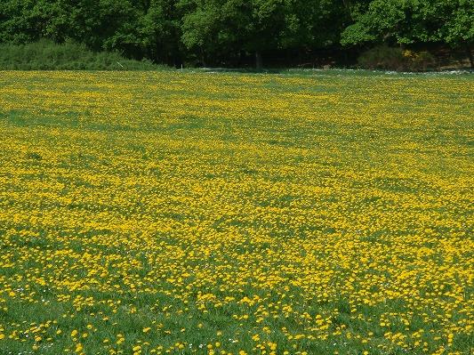 s-DSC03437_20110502044814.jpg