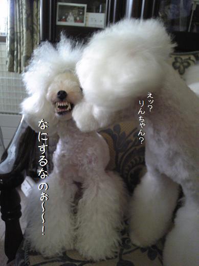 Image076a.jpg