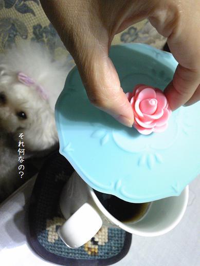 Image142a_20110806183324.jpg