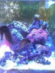 リフジにプチサンゴ