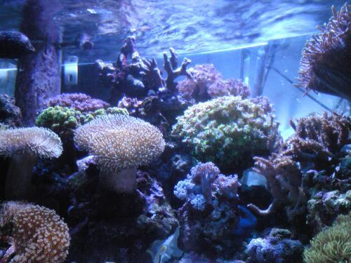 サンゴの風景