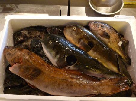 今日の魚たち