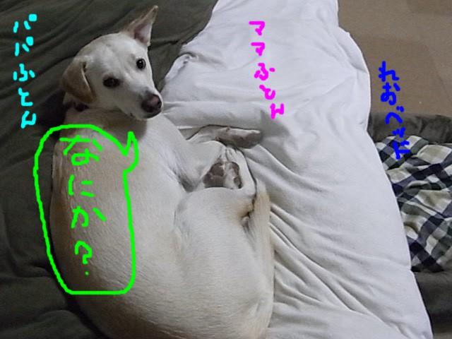 RIMG7533.jpg