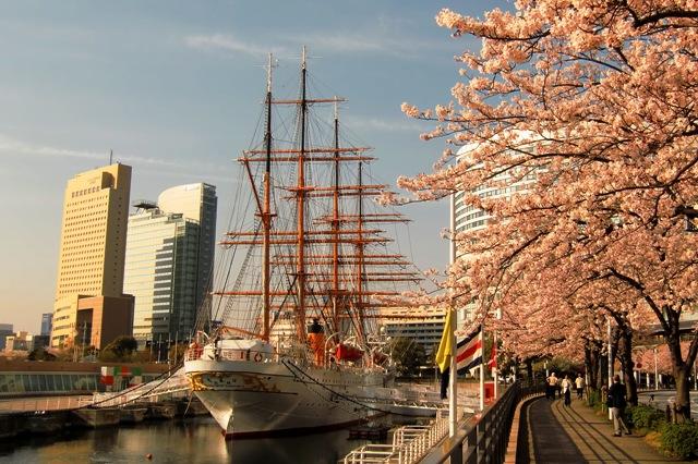 満開の桜と日本丸