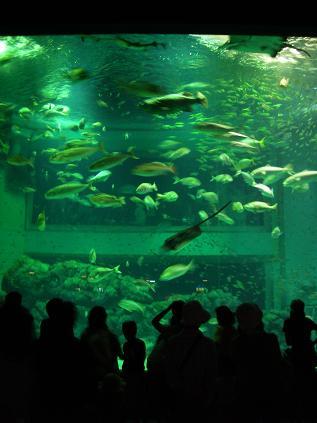 上越水族博物館