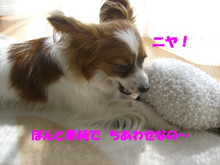 CIMG3973_20120421190831.jpg