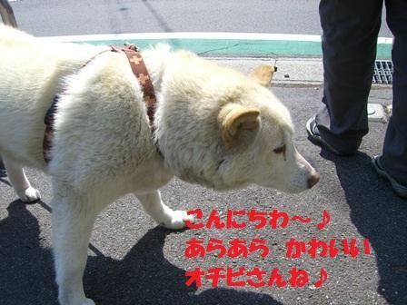 CIMG3982.jpg