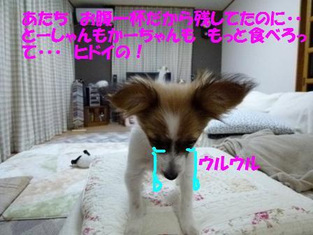 P1120511.jpg