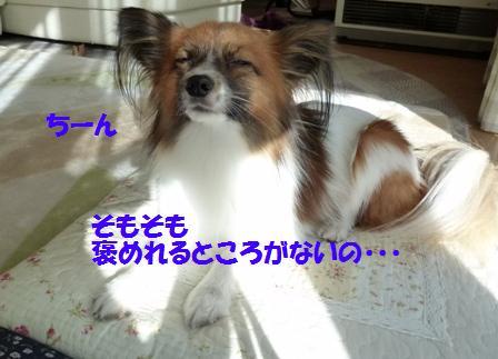 P1120971_20111219174122.jpg