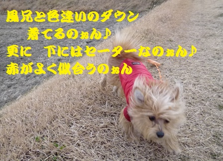 P1140058_20120105195432.jpg