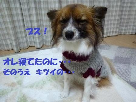 P1160091.jpg