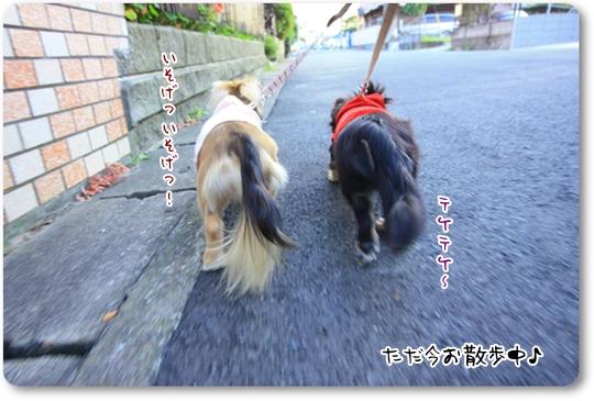 090827お散歩