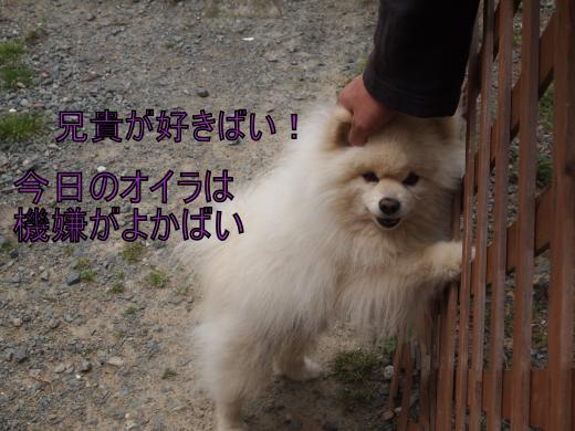 ・搾シ撤4201820_convert_20120422230030