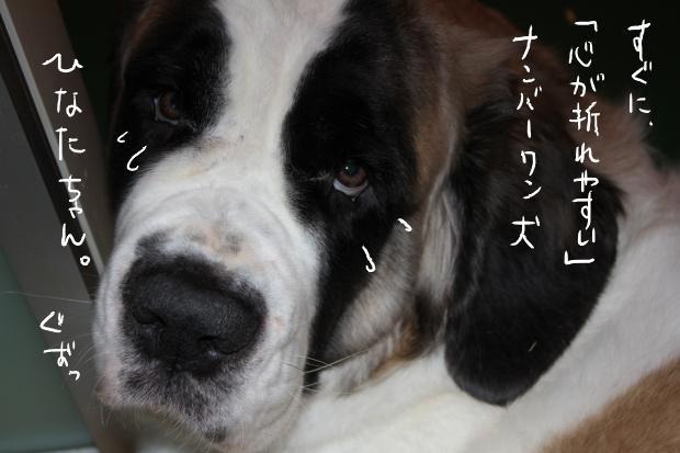 01_20111130033910.jpg