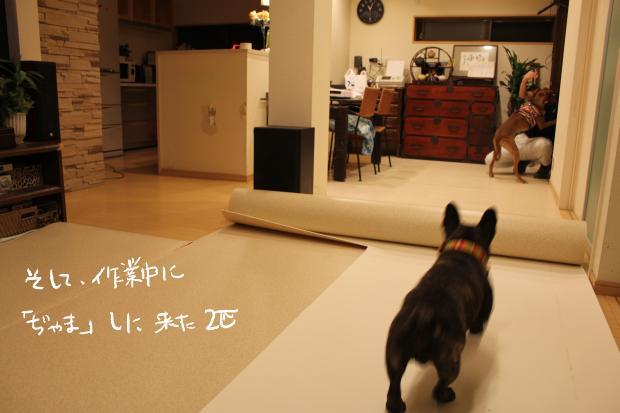 03_20120220120039.jpg