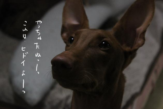 04_20111118173103.jpg