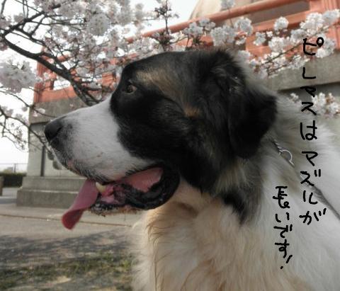 06_20120423003208.jpg