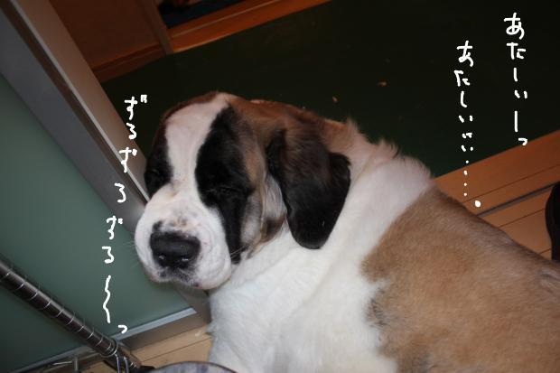 10_20111130033959.jpg
