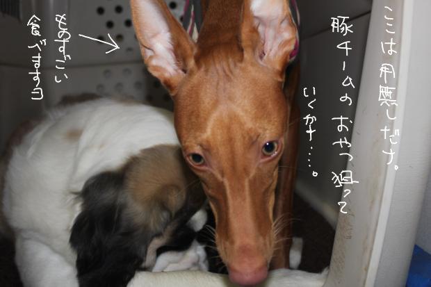11_20111125015621.jpg