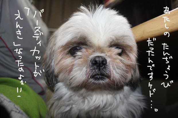 11_20111130033959.jpg