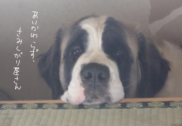 11_20111203232139.jpg