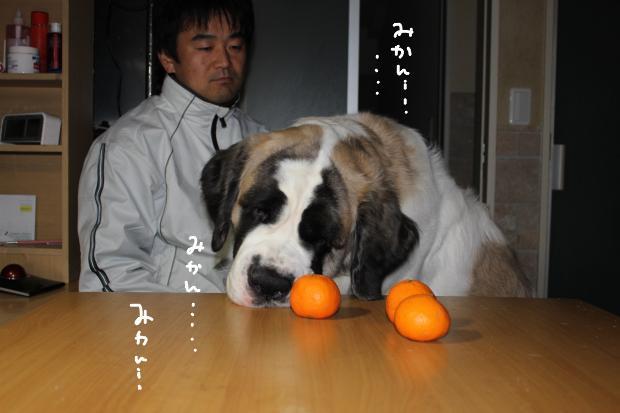 12_20120114010527.jpg