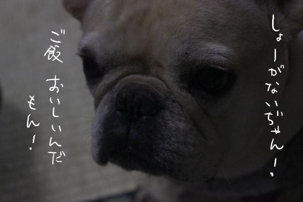 13_20111118173233.jpg