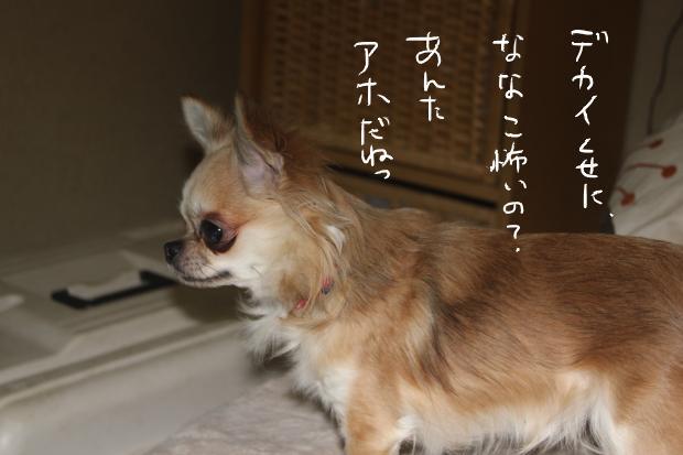 15_20120223121820.jpg