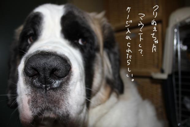 16_20111203232258.jpg