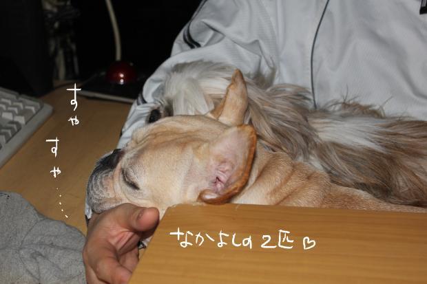 19_20120223122341.jpg