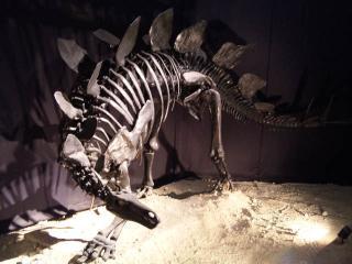 ステゴサウルスだよ~♪