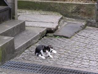 第一街猫発見(笑)