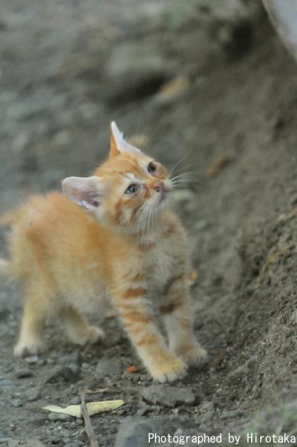 ふわふわ仔猫