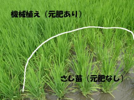 稲の今の状況