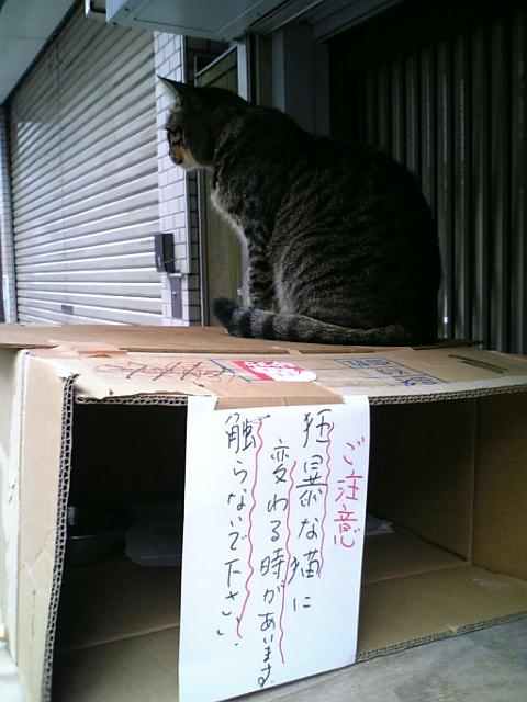凶暴ネコさん2