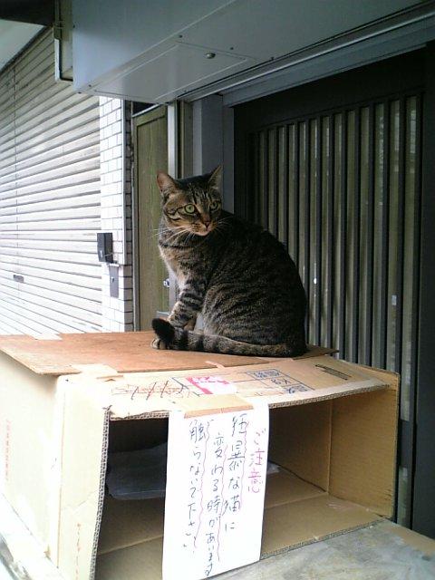 凶暴ネコさん3