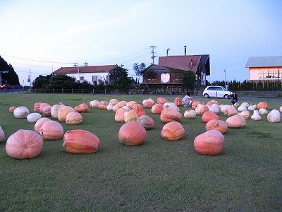 IMG_かぼちゃ