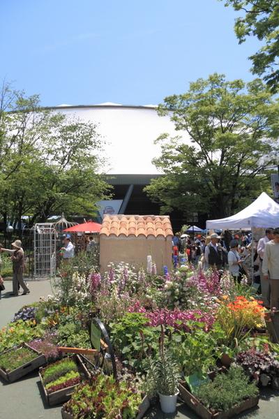 国バラ会場(西武ドーム)1
