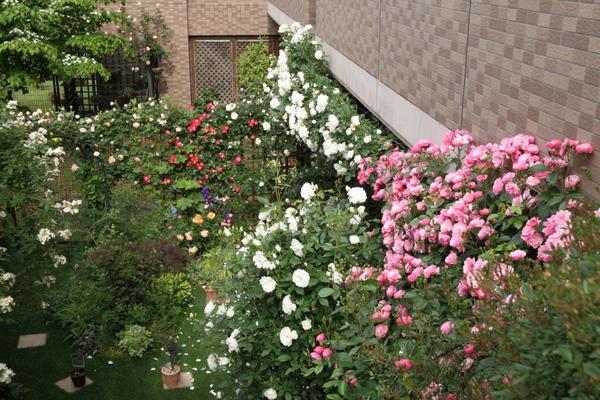 今朝の庭(全景)