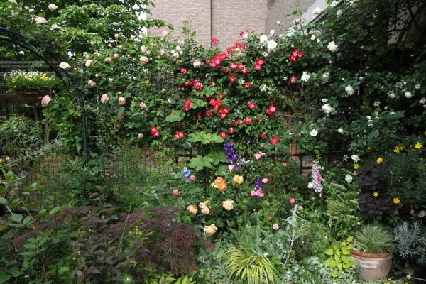 フェンスとバラ花壇の様子